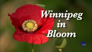 Winnipeg In Bloom