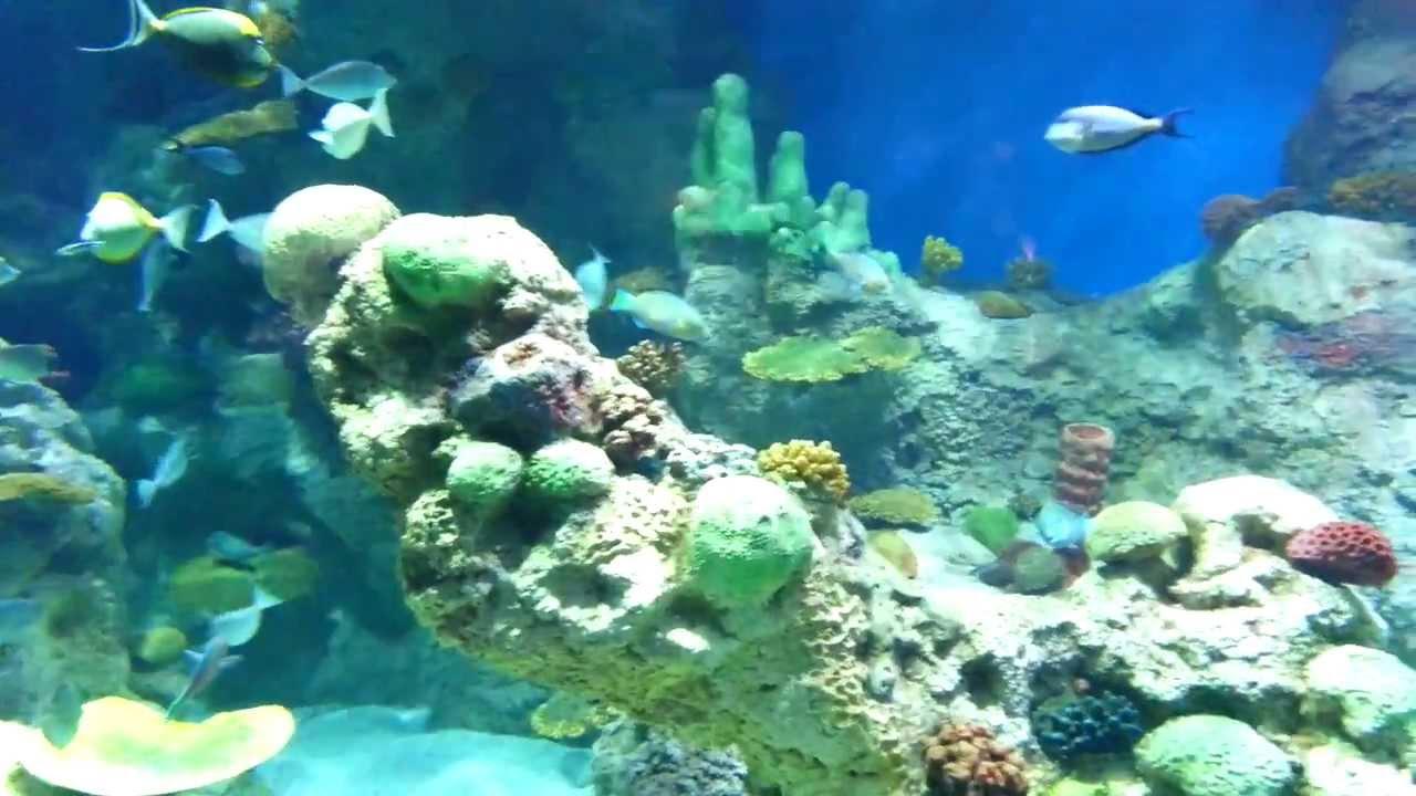 Fish aquarium in jeddah - Fakieh Aquarium In Jeddah