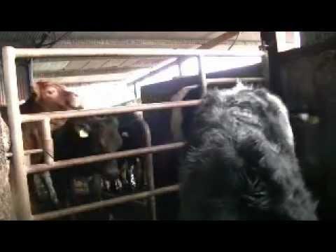 creep gate at feeding time