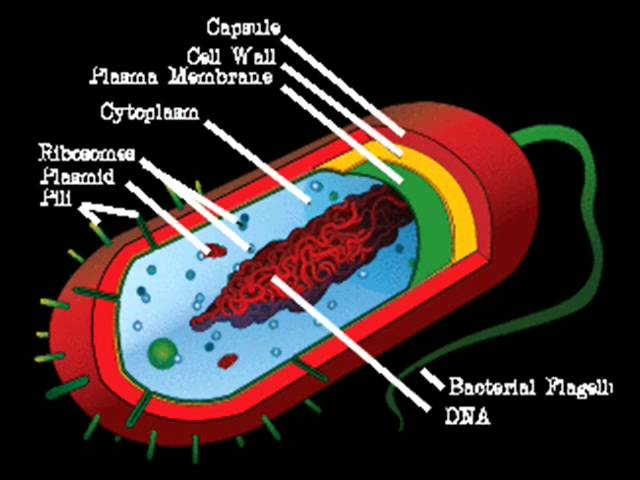 Bacteria And Prokaryotic Cells Lessons Tes Teach