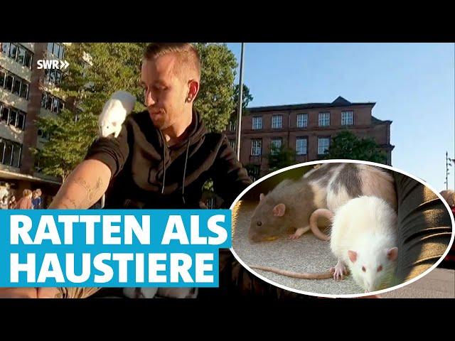 Ratten in der Fußgängerzone: Marco und Jana gehen mit ihren Haustieren spazieren