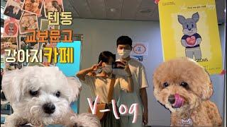 V-Log 남자친구와 창원 상남동 데이트 [우마이 텐동, 교보문고, 애견카페🐶]