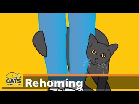 Black cat heroes: National Black Cat Day 2017