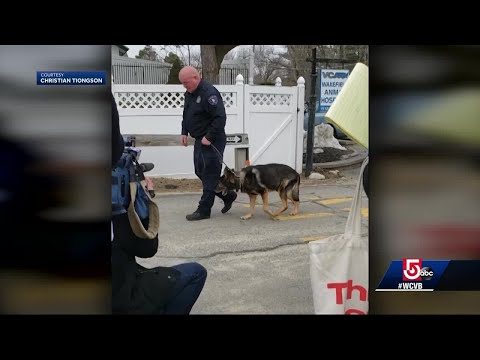 Saugus police say goodbye to K9 with untreatable cancer