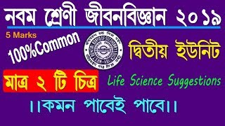 CLASS 9 _LIFE SCIENCE SUGGESTION 2019//Class ix life science Suggestion for 2nd Evaluation 2019.
