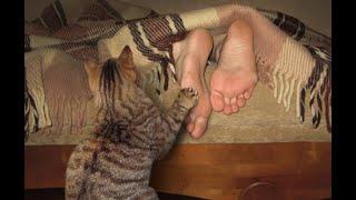 Как-то утром меня разбудил кот, но у меня нет кота! История появления питомца!