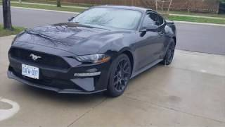 FACTORY ORDERED: 2019 Ford Mustang Ecoboost ! Performance Package ! Active Valve Performance Exhaust
