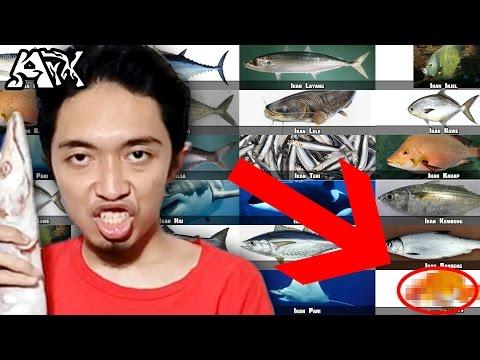 ♫ Yuk Para IKAN TONGKOL, Nyanyi Jenis2 Ikan! - ArmanArX