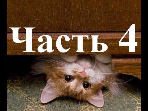 Приколы со смешными котами.Видео за 2014 г. Часть 4. - YouTube