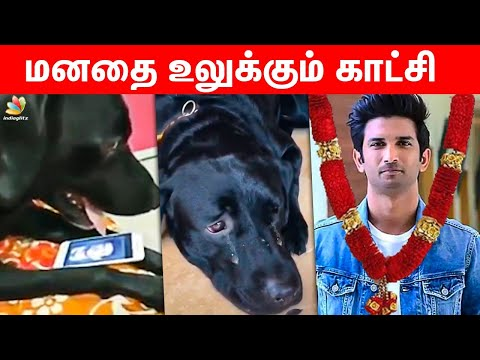😢Sushant Singh's Dog Heart Touching Video   MS dhoni, Chhichhore, Raabta, Bollywood Nepotism   News from YouTube · Duration:  3 minutes 37 seconds