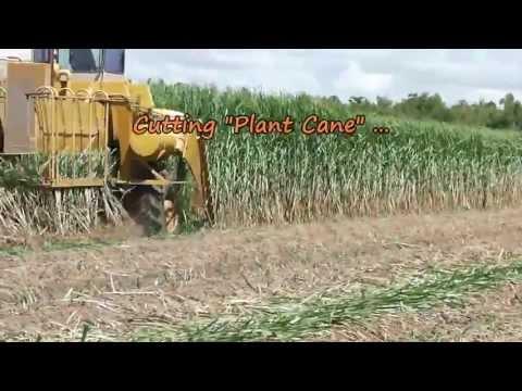 Planting Sugarcane in Louisiana 8/23/2013