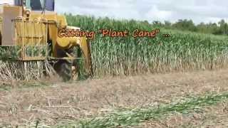 Planting Sugarcane in Louisiana 8/23/2013