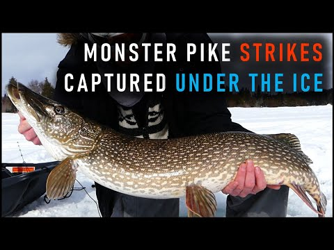 PIKE ICE FISHING | Incredible UW Footage + Techniques & Tackle