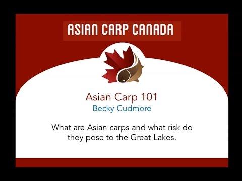 Asian Carp 101: Becky Cudmore