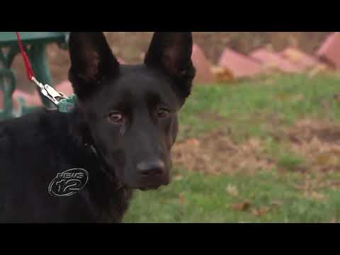 Paws of Wars pairs rescue dogs with veterans who have PTSD   News 12 Westchester