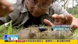 推糞金龜聖甲蟲 大自然清道夫-民視新聞