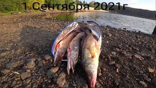 Судак и Щука рыбалка осенний троллинг Верхне Сысертское водохранилище 1 Сентября 2021г