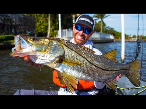 Fishing For BIG Snook & A Surprise Wildlife Encounter | Field Trips Florida