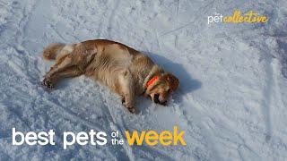 Slip Sliding Away   Best Pets of the Week