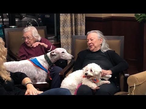 Therapy dogs visit seniors who need a little extra brightness in their lives