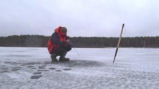 Такой себе Первый Лёд Ловля Окуня на Балансир