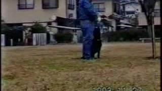 1992年に導入の当犬舎、初代FT系の「ジョジョ」は、 神奈川・中井...