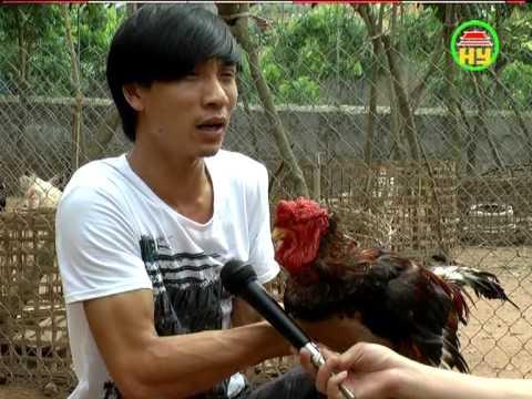 gà đông tảo - Trang trại gà Đông Tảo thuần chủng - Gà Đông Tảo Thơm Mơ.