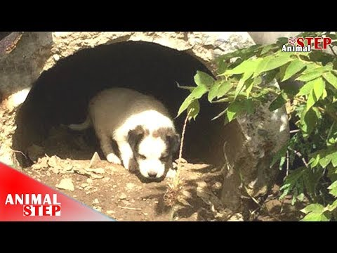 Poor Stray Dog Family Spent Life In The Drain – Hope They Would Be Adopted Soon