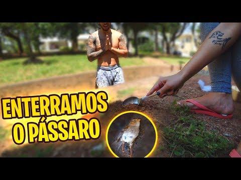 ENTERRAMOS O PASSARINHO QUE MORREU NA NOSSA PISCINA!