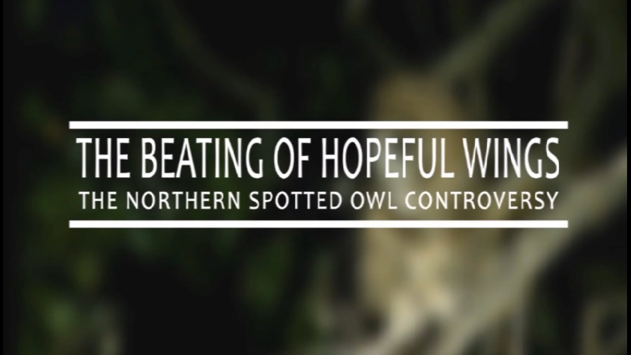 spotted owl controversy