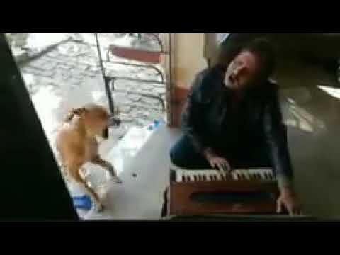 Dog Singing with Harmonium