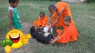 #BabyLuKa #BeLa #PetAnimal The monk like to play with Bela and baby Luka #13