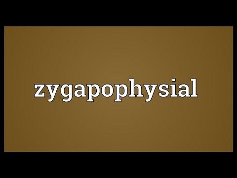 Header of zygapophysial