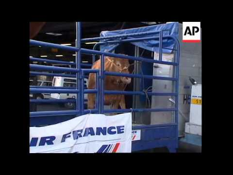 """FRANCE: ANIMALS SENT TO JAPAN FOR """"YEAR OF FRANCE"""" CELEBRATIONS"""