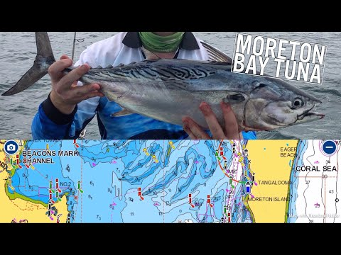 How To Target Moreton Bay Tuna - A Beginners Guide