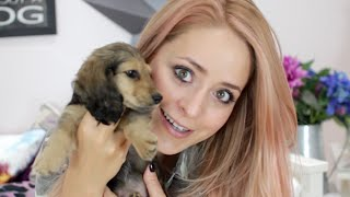 Meet PIGLET + Puppy Haul! Thumbnail