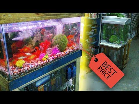 Cheap Fish Tanks / Aquariums - Petco $1 a gallon sale. Craigslist, Buying a Fish Store