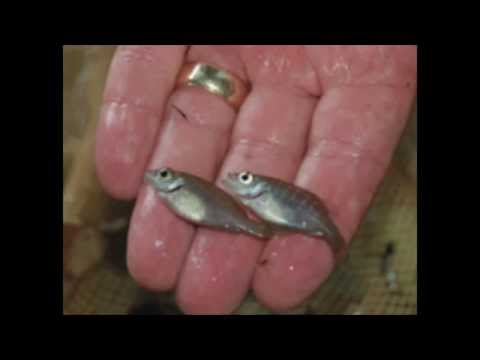 Do You Have The Right Fish In Your Pond? (7/25/15)