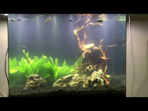1. Cycling Nuvo 38 - Freshwater Aquarium - Aquascape & Filtration Modifications