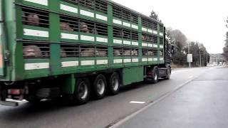 Scania R500 V8 bétaillère