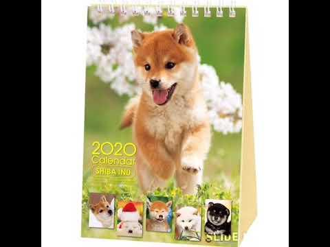 shiba-inu-calendar-2020-with-adorable-shibas'-pictures