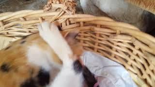 Gambar cover My Cat Giving Birth To Single Kitten