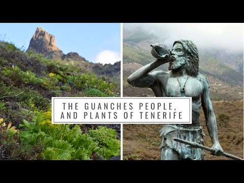 The Guanches People And Native Plants Of Tenerife (Canary Islands History, Medicinal Plants)