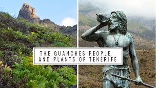 The Guanches People and Native Plants of Tenerife Canary Islands History Medicinal plants