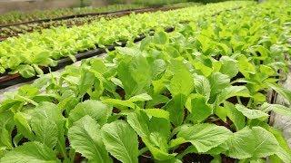 Hướng tới phát triển nông nghiệp bền vững tại Việt Nam