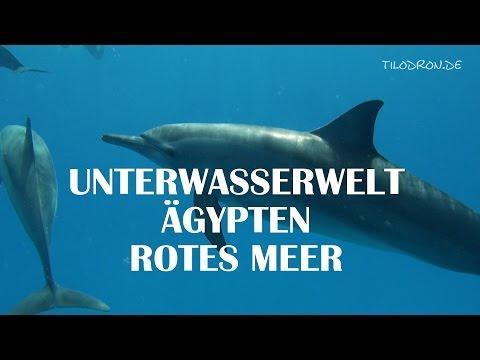 Schnorcheln Rotes Meer Ägypten2013из YouTube · Длительность: 3 мин39 с