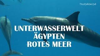 Rotes Meer Ägypten Unterwasseraufnahmen Delfine Schildkröte Korallen Riff Fische Egypt