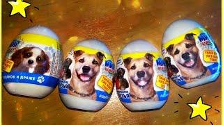 Открываем новые яйца сюрпризы про собак:)Open new eggs surprises about dogs :)