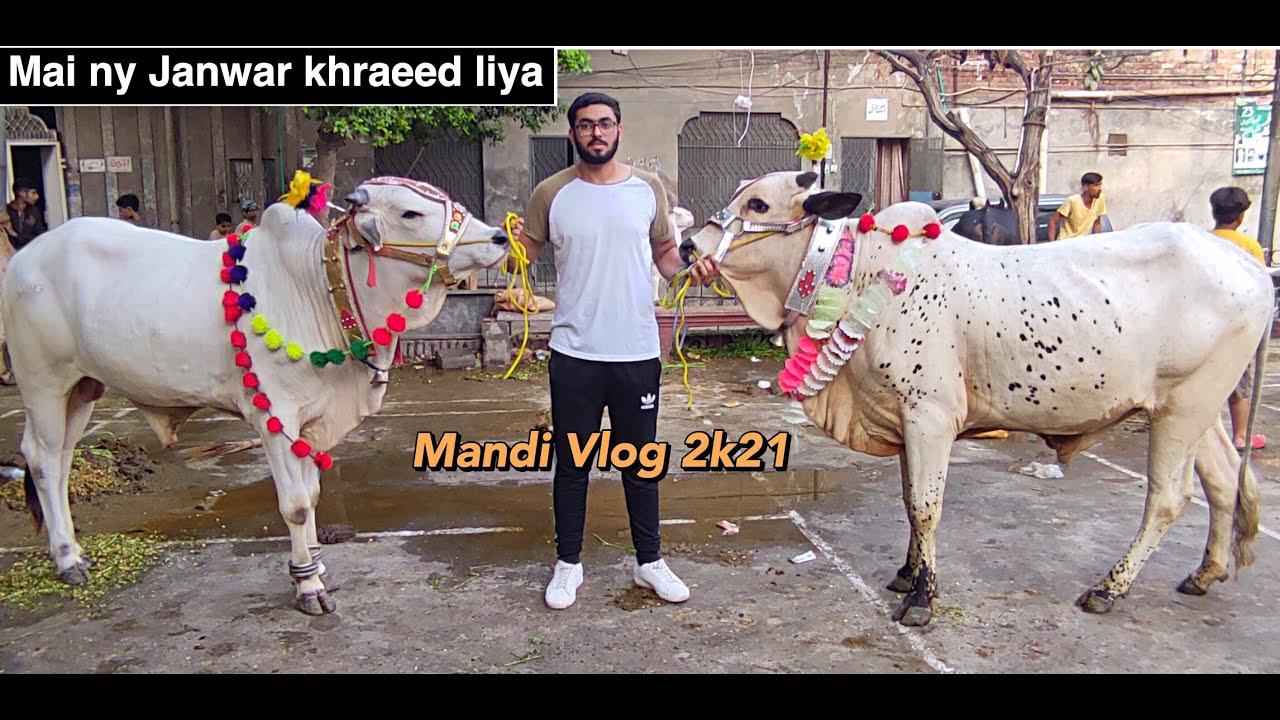 I Bought My Cow | Cow Mandi Vlog 2021 | Cow for Qurbani 2021 |Lahore Cow Mandi 2021|Eid ul Adha 2021