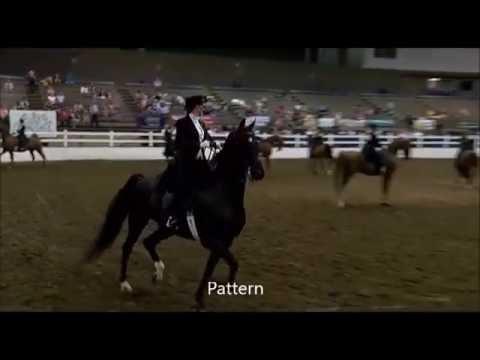 2017 Us Saddle Seat Equitation Young Rider Lily Johnson Youtube